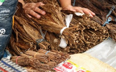 The Process of Making Cigars