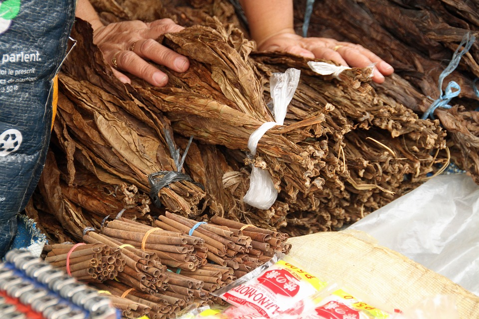 Process of Making Cigars