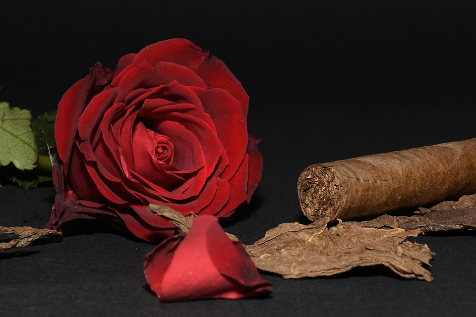 Perfect Cigar for Valentines Day