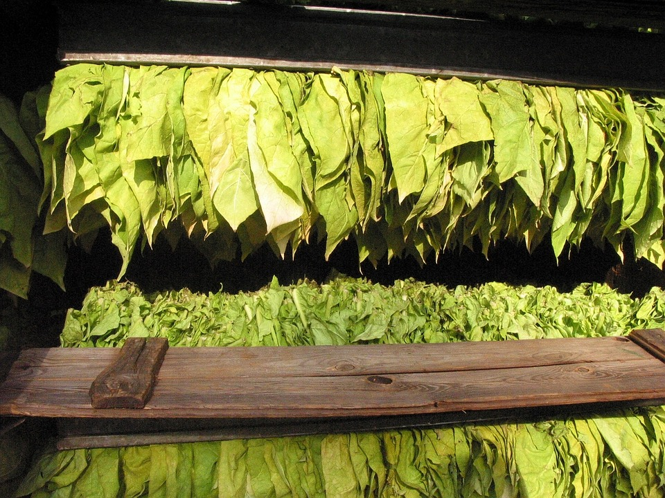 Cigar Scents and Flavors
